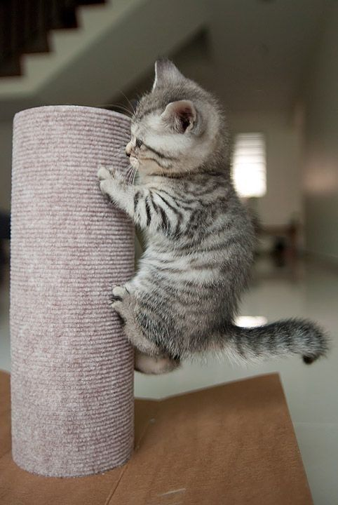 Kittens What To Expect 5 Essential Tips For When You Adopt Kittens Cutest Cute Baby Animals Cats Kittens