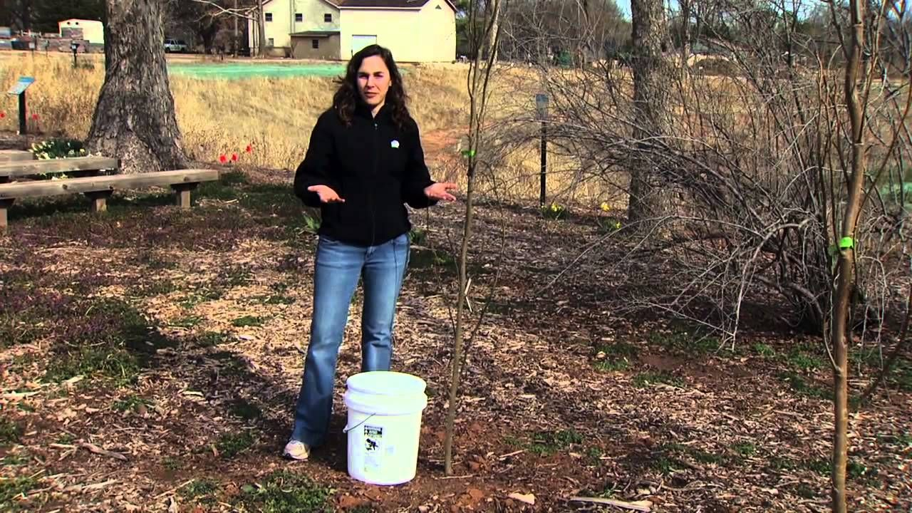 Oklahoma Gardening host Kim Toscano talks about and demonstrates ...