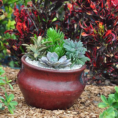 62 best ideas about Fab and Fun Container Garden Ideas on
