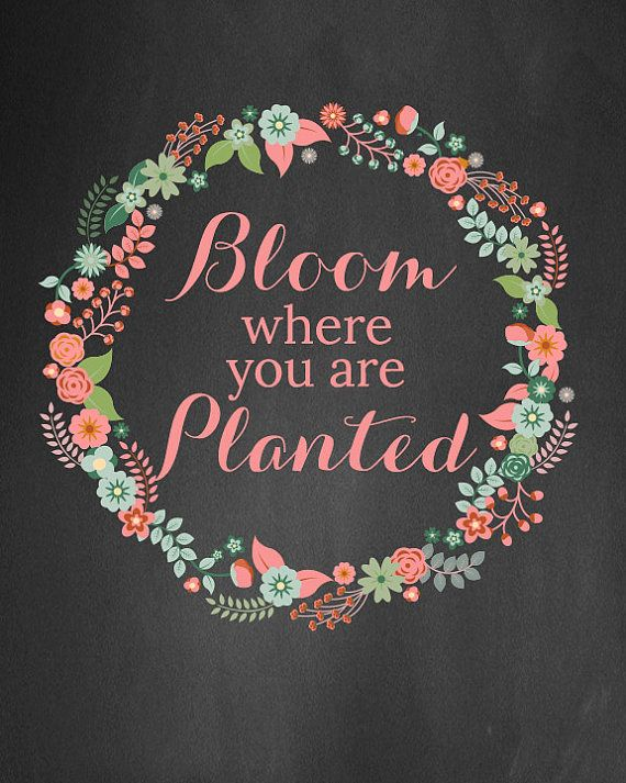 Bloom Where You Re Planted Floral Chalk Board By Liviloudesigns With Images Bloom Where Youre Planted Bloom Chalk