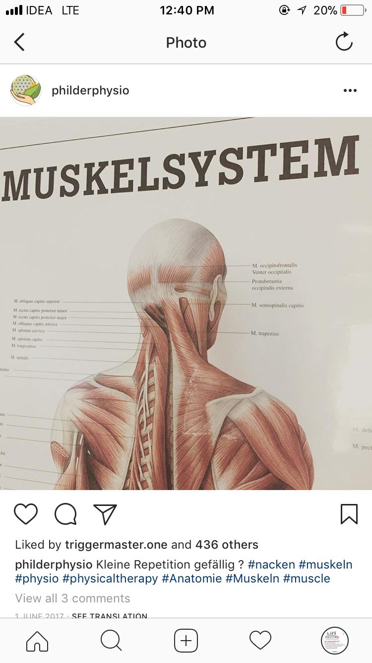 Ausgezeichnet Nacken Muskeln Anatomie Ideen - Menschliche Anatomie ...