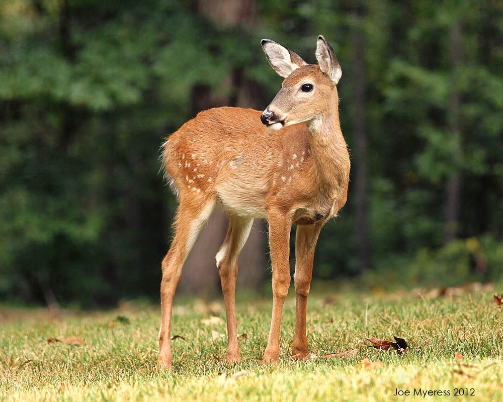 doe images google search stuff i want to make inspiration