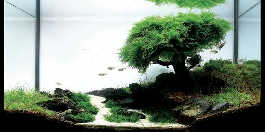 Bonsai Created From Driftwood And Moss Aquarium Einrichten Nano