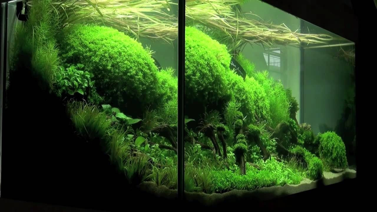 Freshwater aquarium fish in south africa - Aquascaping Aquarium Ideas From The Art Of The Planted Aquarium 2011