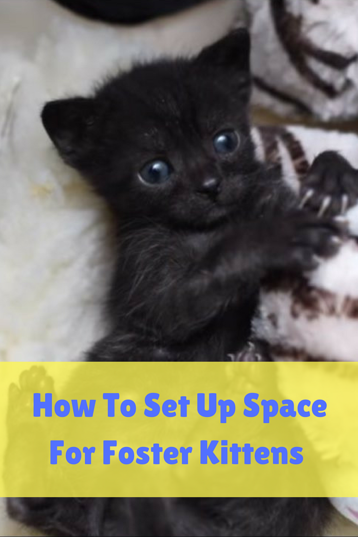 How To Set Up Space For Foster Kittens Foster Kittens Cat