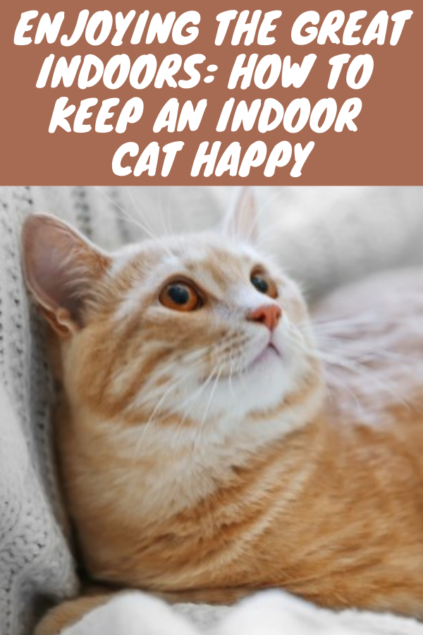 Enjoying The Great Indoors How To Keep An Indoor Cat Happy In 2020 Funny Cute Cats Indoor Cat Cats