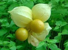 Resultado de imagem para  frutas raras