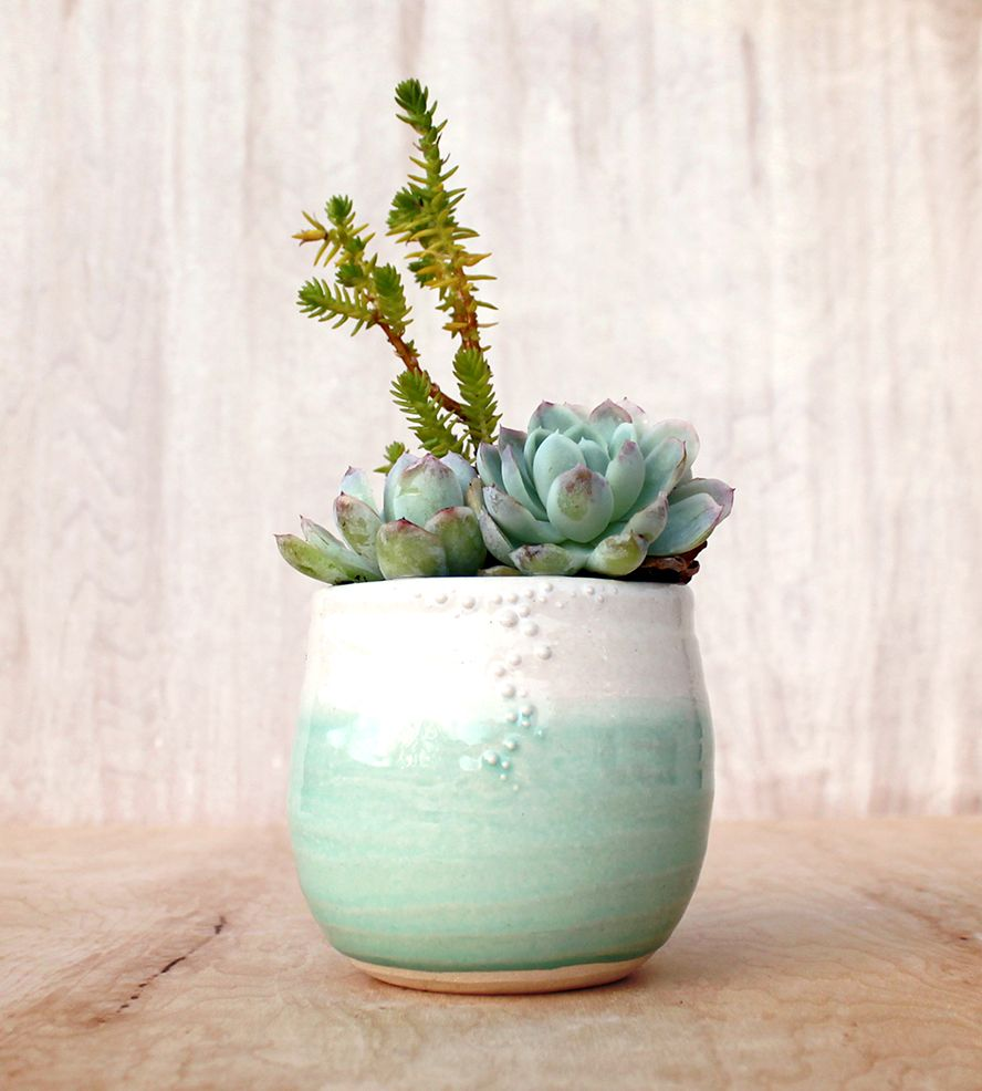 Earn 3% cash back on this planter when you use StuffDOT! #dotshopsave House and Home  ~ 01114943_Sukkulenten Zimmerpflanzen Pflege