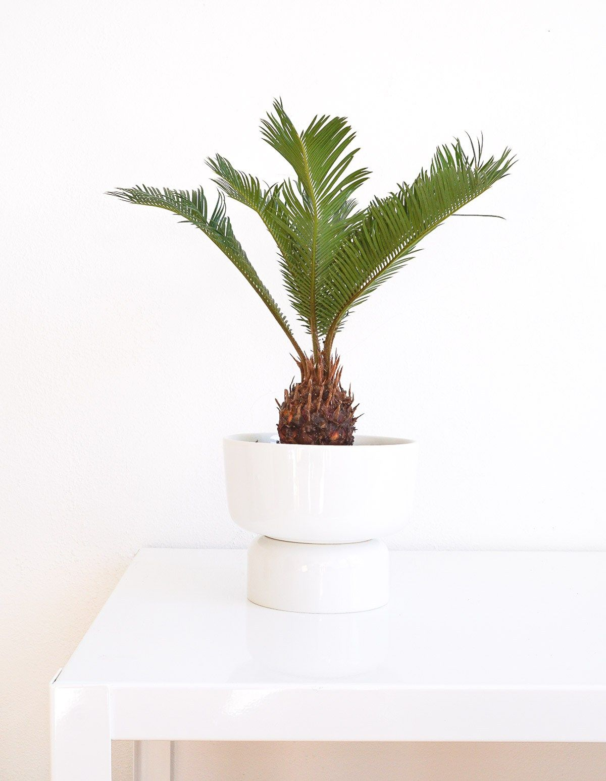 Mid modern planter sugar cloth houston blogger diy for Billige einrichtung