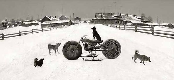 Pentti Sammallahti S Dogs Black White Photography Black White Beach Vintage Photography