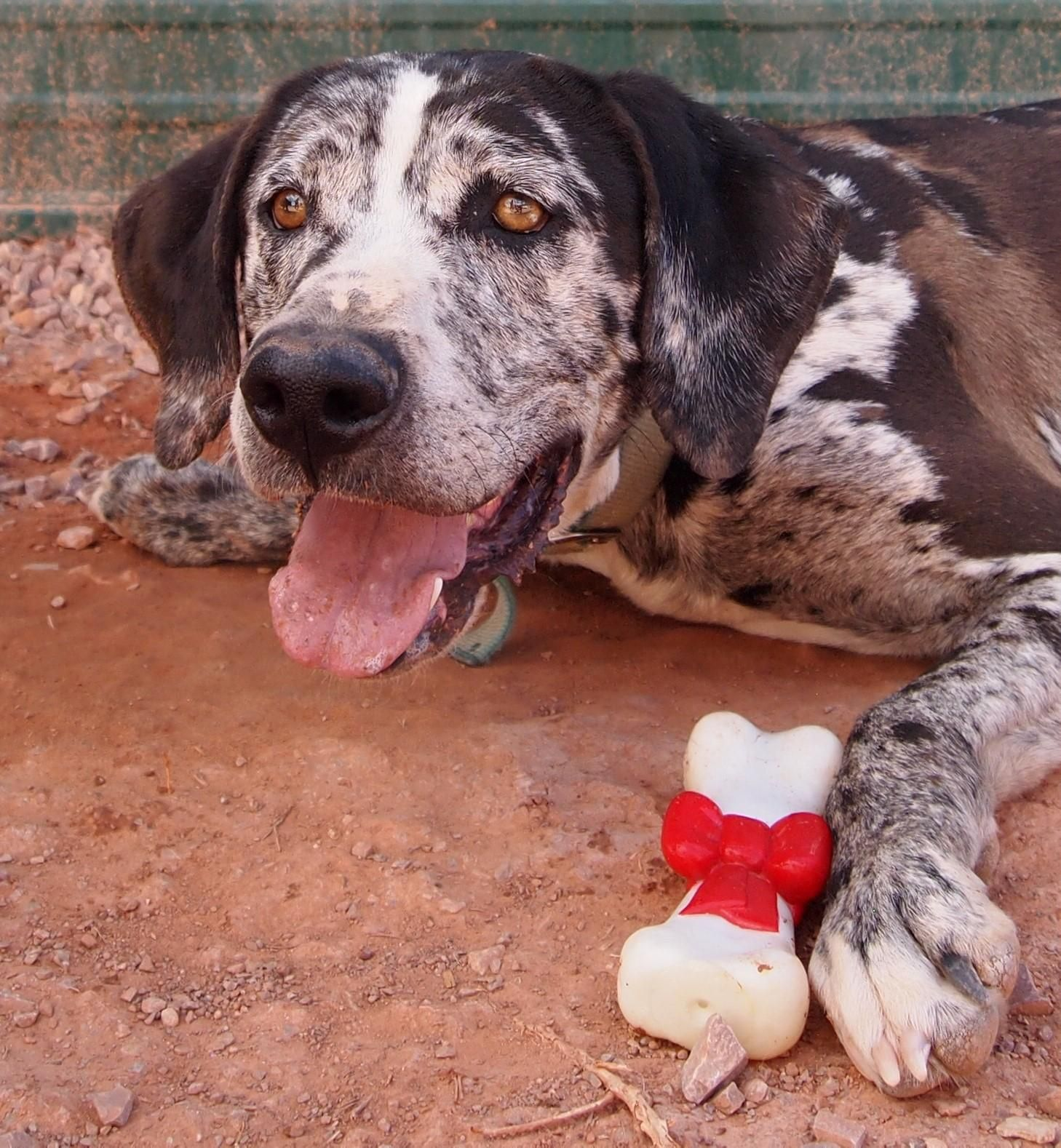 Adopt Jack On Dog Search Dogs Humane Society