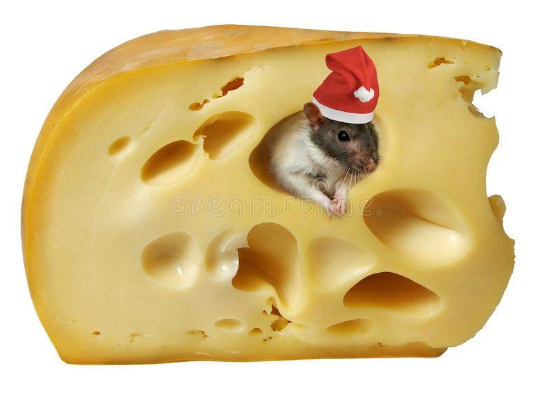 Rat ACEO Print Red Berries by I Garmashova