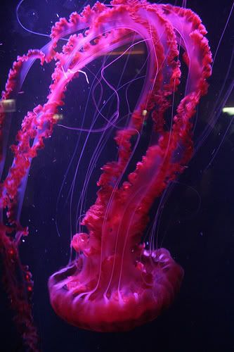 JellyFishyy :D