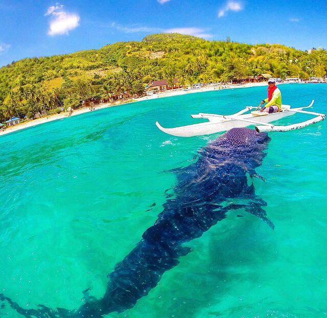 Tiger shark in filipin   Philippines travel, Philippines