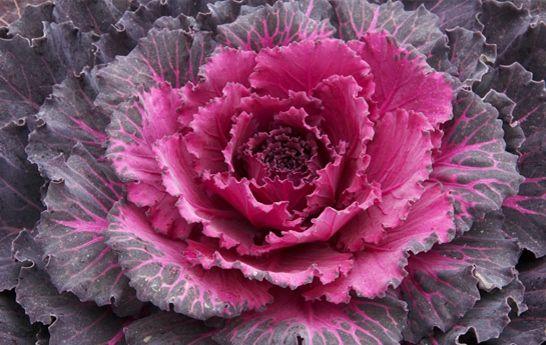 Winter Vegetables and Ideas for Preparing Them - Que Rica Vida