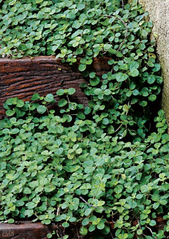 5 Especies De Plantas Para Cultivar No Banheiro Plantas Plantas