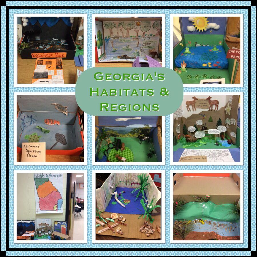 Stem Schools In Ga: Dioramas Made By 3rd Graders On Habitats/regions Of