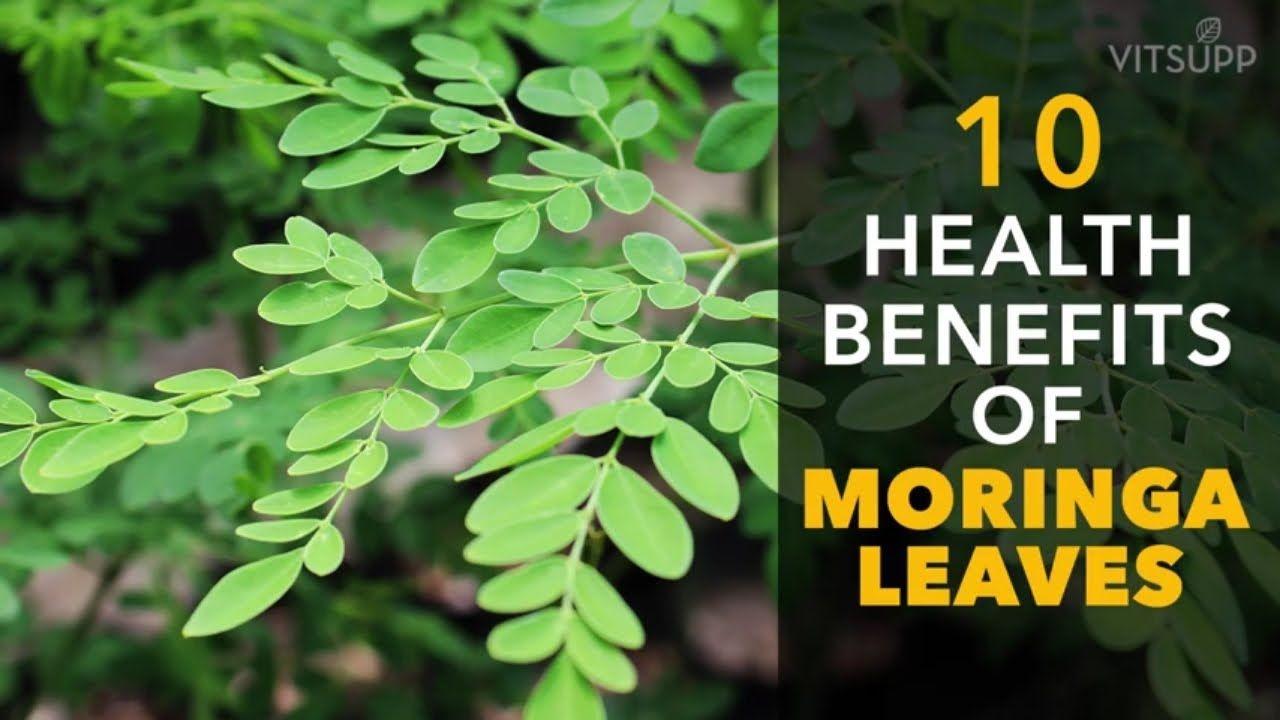 MEDICINAL MORINGA SEEDS oleifera drumstick tree bonsai exotic SEED 10 seeds