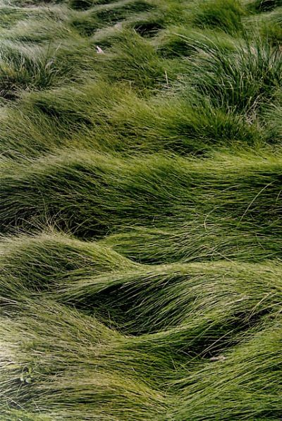 """pausesbetweenthought: """" Imagine the dance created by the breeze…Like 'land waves'. """""""
