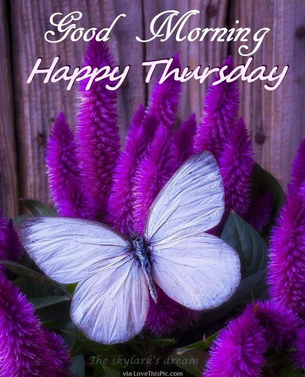 Beautiful Good Morning Happy Thursday Quote❣❣❣ (With images ...