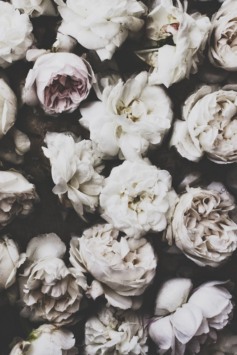 Iphone Wallpaper Flowers Floral Bloom Iphone black and white roses wallpaper