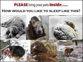 It's cold outside!  PLEASE!  PLEASE!  Bring your pets in doors. Thanks