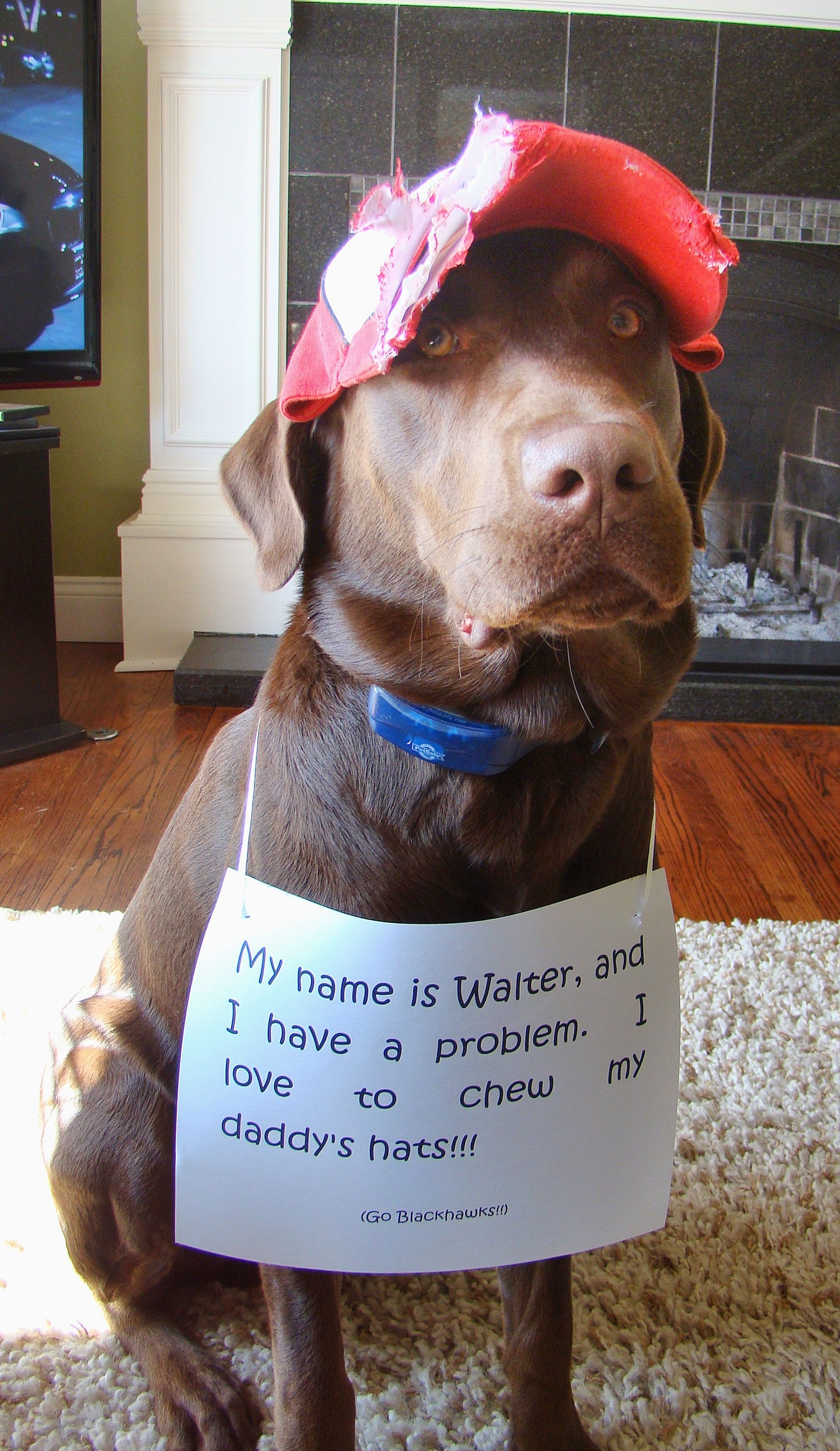 Walter eats Hat Dog shaming, Dog shaming funny, Animal