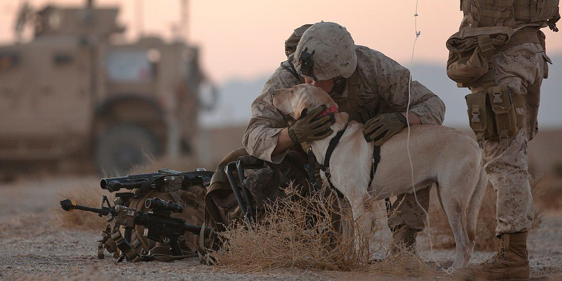 A Bomb Sniffing Military Dog Named Mally Was Finally Reunited With