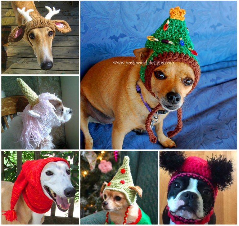 Crochet Dog Hat Pattern Ideas Best Collection Free Pattern