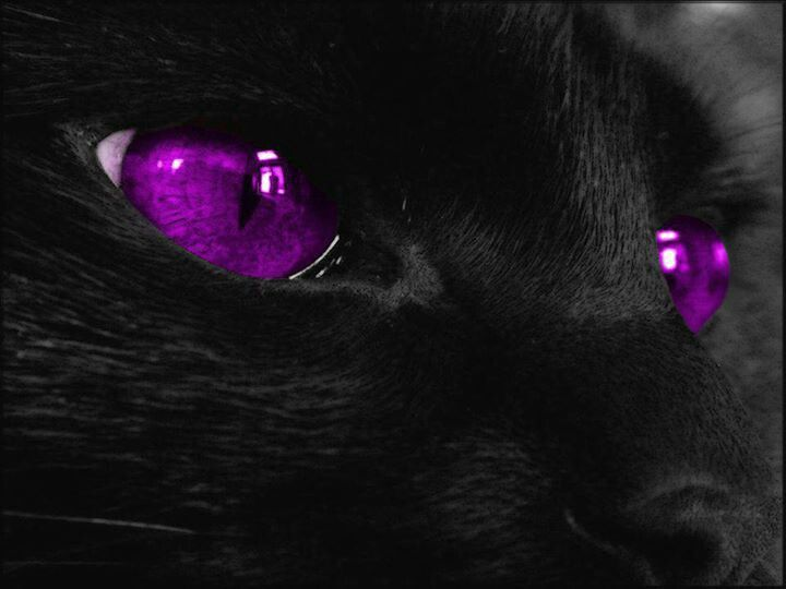 Pin By Doreen Wilcox On Love My Purple Pinterest Red Black And Eyes