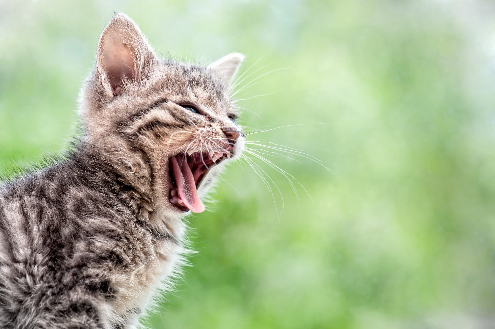 Five Common Sounds Your Cat Makes And What Each Means In 2020 Cat Yowling Cats Kitten Meowing
