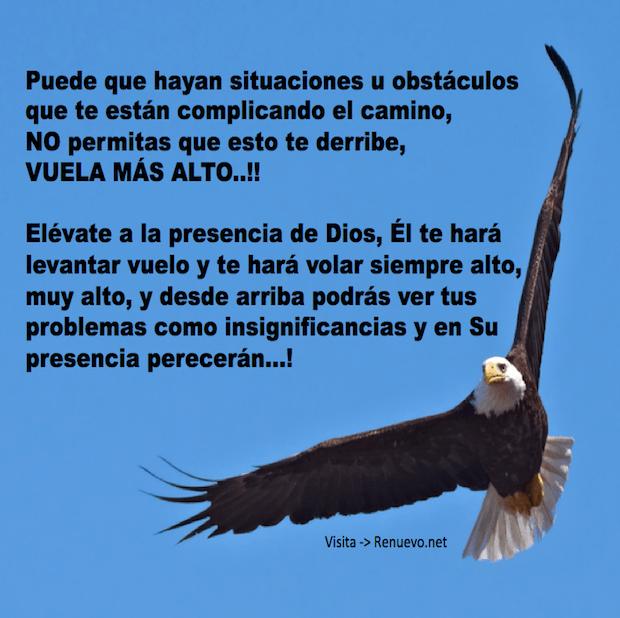 Imagenes De Aguilas Con Reflexiones De Superacion Y