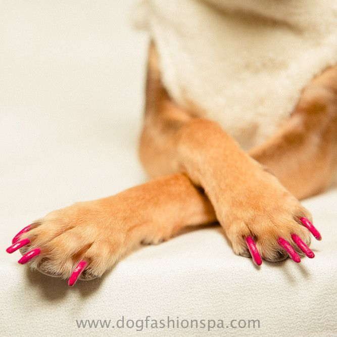 Happy Paw Dog Nail Polish Dog Nails Dogs Happy Paw