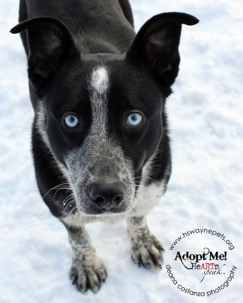 Adopt Apollo On Border Collie Mix Puppies Collie Dog Collie Mix