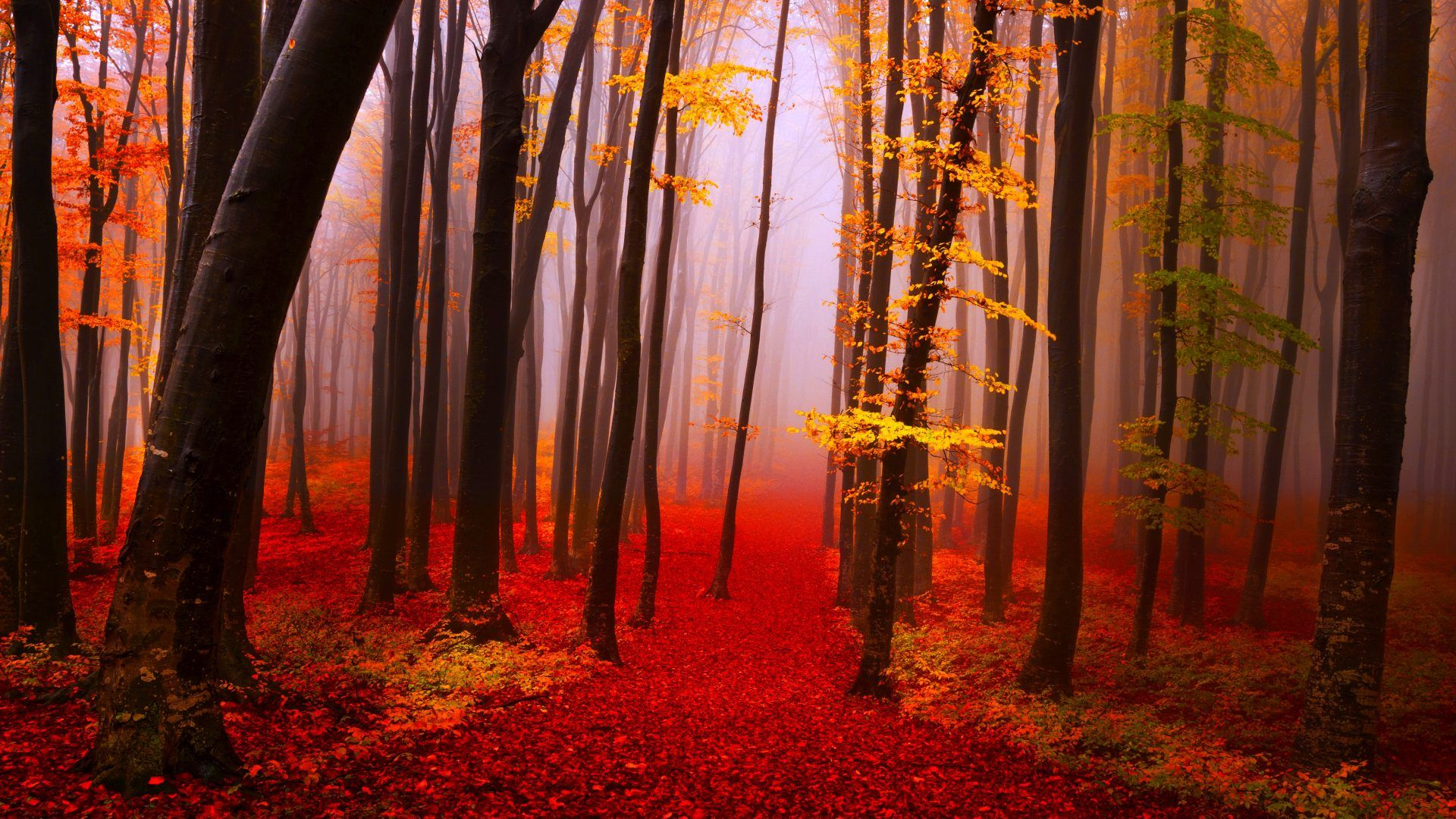 Autumn Forest Calmness Serenity Walk Path Trees Nature Fall
