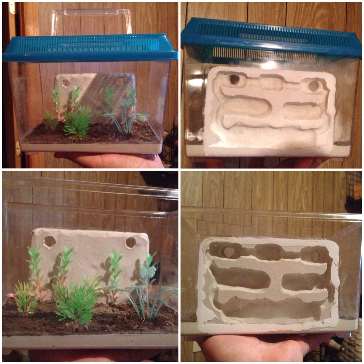 Container Haus Zusammenstellen Cool Formicarium Homemade For Youngchild Our Begginer Ant