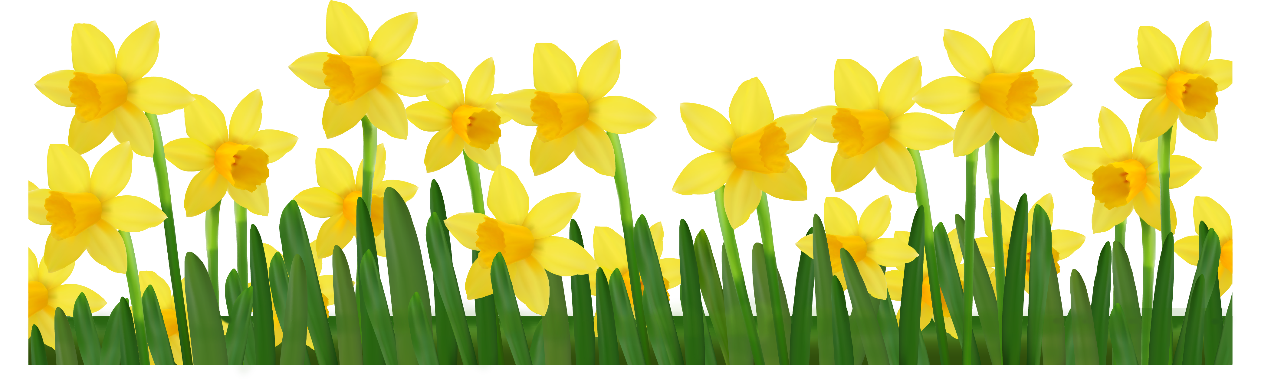 Grass With Daffodils Png Clipart Picture Clip Art Daffodils Grass