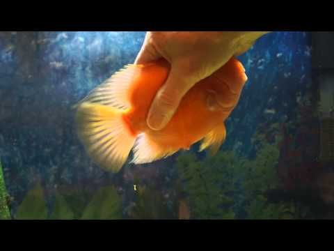 #Fun #Cute #Fish