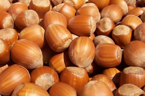 #Hazelnut nut carrier oil is easily absorbed into the skin and can help relieve #acne http://www.enaissance.co.uk/hazelnut-carrier-oil