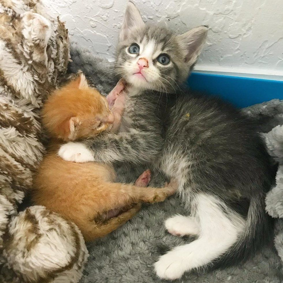 Kittens Help Save Their Tiniest Brother From Another Mother With Cuddles Love Meow Kittens Cat Cuddle Cats And Kittens