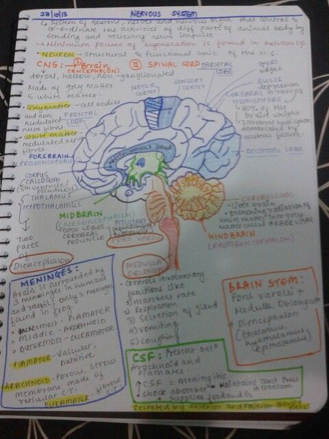 Visual notes-- I like taking notes this way (notes all around the ...