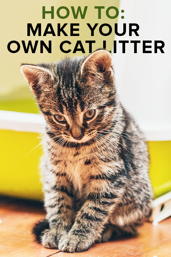 How to Make Homemade Cat Litter Cat litter, Cat care