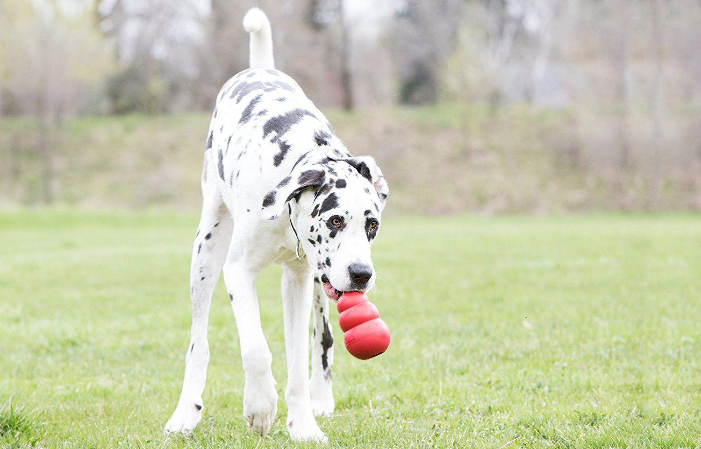 10 Best Big Dog Toys Strong Stimulating And Affordable Dog