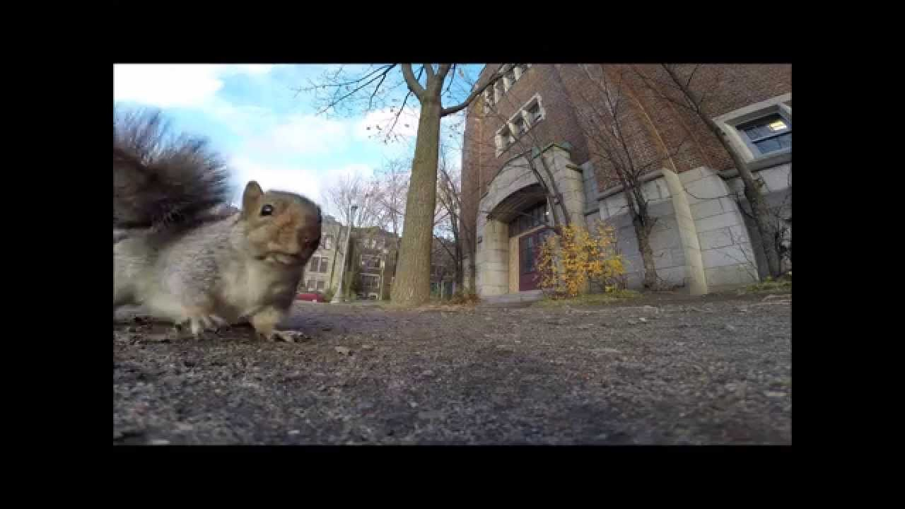A squirrel nabbed my GoPro and carried it up a tree (and then dropped it)
