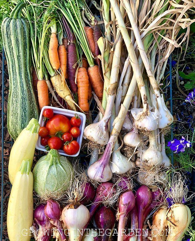 Best Soil for Raised Bed Vegetable Gardening Backyard