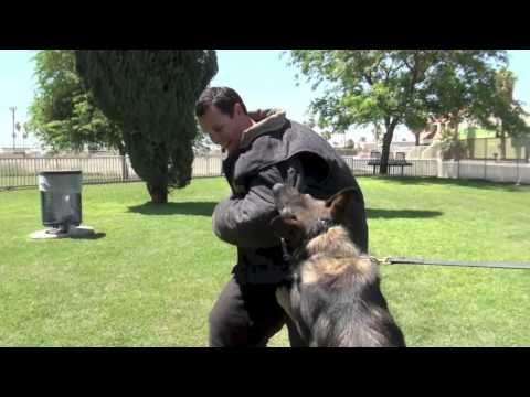 Police K9 Training Most Important Component The Decoy Police
