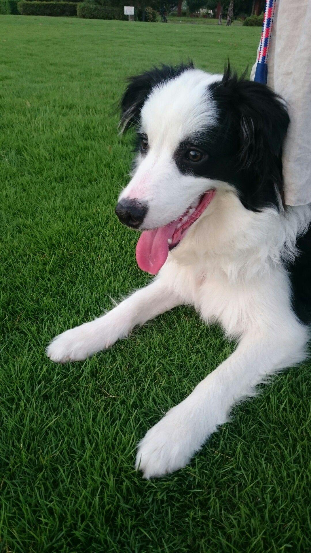 Meeka Yorkshire Terrier Mix Yorkshire Terrier Unique Dog Breeds