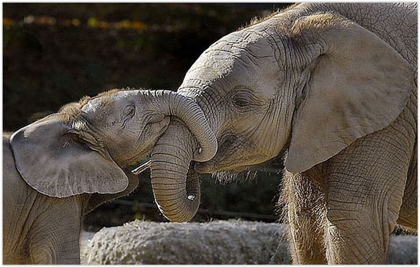 Słonica z małym
