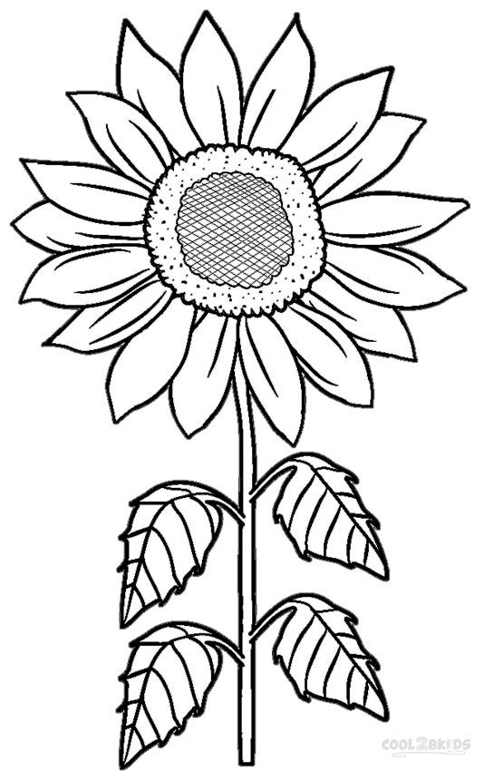 outline pictures flowers coloring pages for kids | Printable Sunflower Coloring Pages For Kids | Cool2bKids | Sunflower coloring pages, Flower ...
