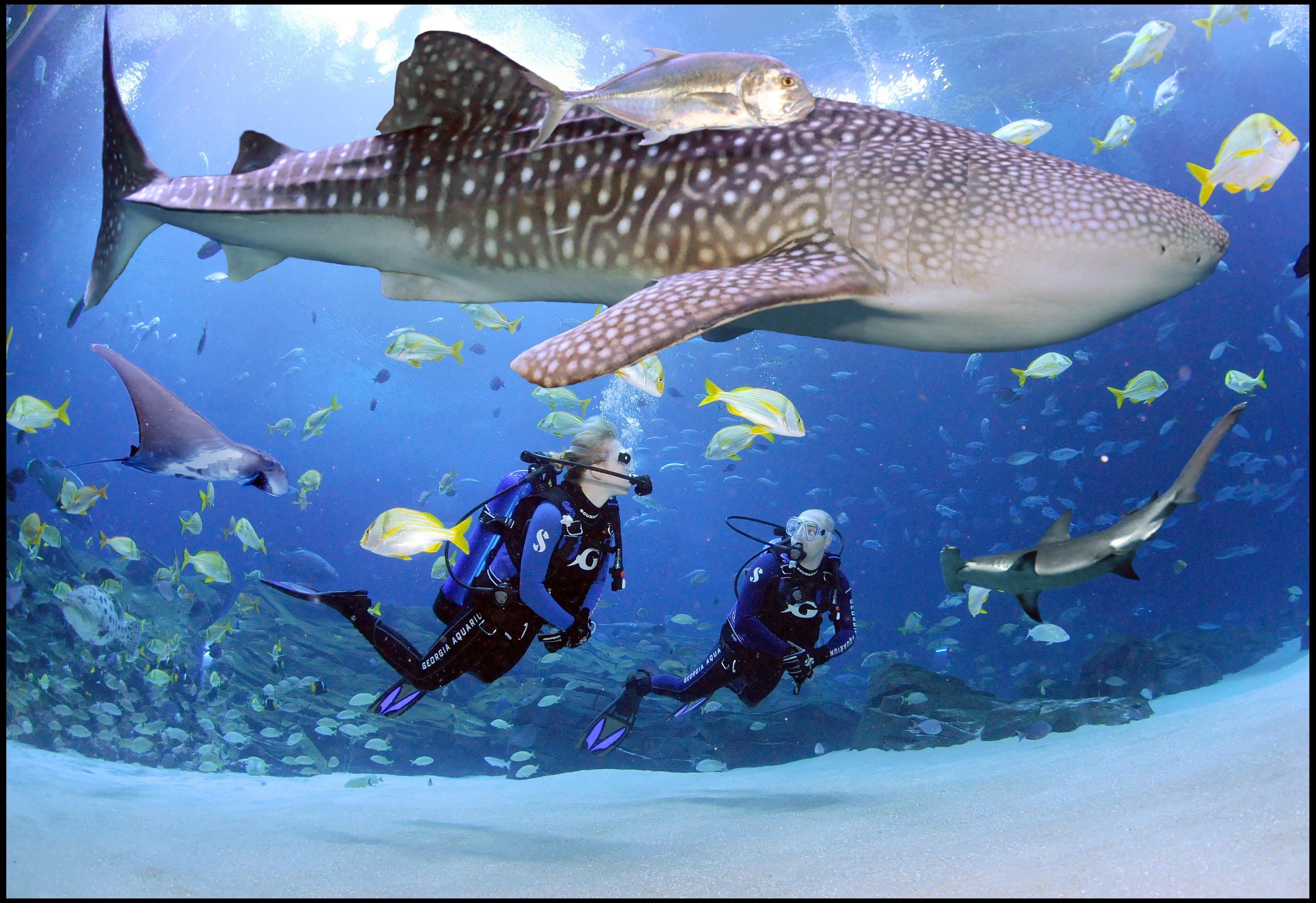 Suit Up And Scuba Dive Or Swim In The World S Largest Aquarium